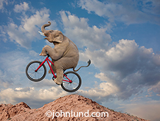 An elephant rides a mountain bike over rough terrain in this funny stock photo about unexpected skill, agility and balance.