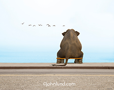 Picture of an elephant as he sits on a bench and stares out to sea pondering, remembering and thinking about life.