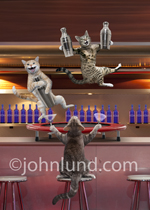 Funny picture of three cats celebrating and shaking martinis from a trampoline on a bar in a nightclub...crazy!