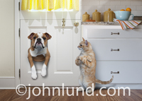 In this funny pet picture an English Bulldog is stuck in a pet door as a smirking cat looks on. Cats are so arrogant!
