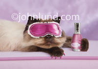 A style conscious cat rests on a pink cushion with a frilly sleepmask and a bottle of her favorite nail polish in a funny cat photo.