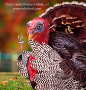 In this funny thanksgiving day turkey picture a turkey looks wide-eyed and startled as he holds a fork in one wing.