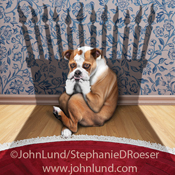 An English Bulldog cowers in the shadow of a birthday cake in this funny dog photo for a humorous birthday greeting card. The poor dog is in a fetal position on the hardwood floor in front of a wall decorated with wallpaper.