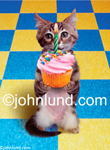 Funny and cute animal and cat stock photo of a kitten holding out a cupcake with one lighted Birthday Candle on it. Adorable kitten pictures.