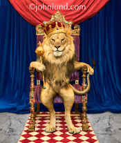 Concept stock photo of a lion sitting on a throne wearing a crown and holding a sceptor as the noble and intimidating King of Beasts.