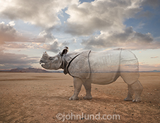 In this photo a rhino begins to fade into nothing as he stands on a vast plain in an image about vanishing species, ecological issues and environmental concerns.