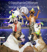 A crazy mix of cats and dogs at a party on New Year's eve in a nightclub in this funny animal picture.