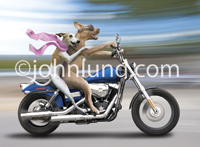 Funny photo of a Whippet and a Pit Bull dog riding a Harley-Davidson motorcycle speeding down a road with a blurred and streaked background.