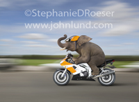 An elephant rides a fast motorcycle, background streaking by, in this funny elephant photo.