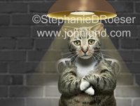 Funny cat picture of a gray tabby being interrogated in a police interview room...and looking very guilty.