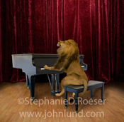 In this picture a lion is on stage playing a grand piano in a regal display of musical talent. With a mane like that he should be the conductor!